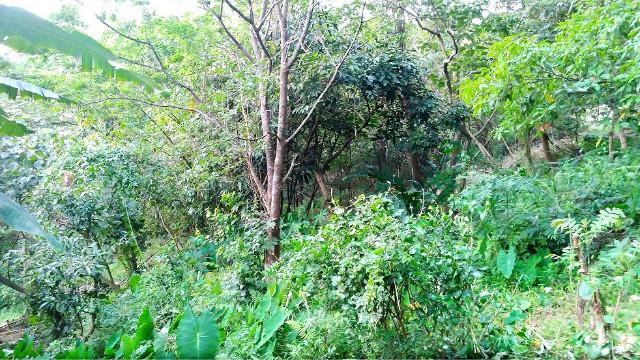 劍潭山親山步道土地,台北市士林區福林段二小段